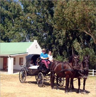 Chelsea in her horse carriage at Nelson's Creek Estate in Paarl